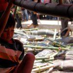 Opferzeremonie in Tanah Toraja
