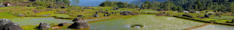 Tanah-Toraja