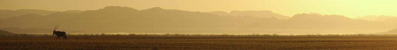Antilope im Morgengrauen