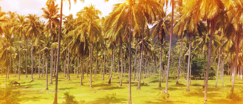 Auf dem Weg nach Roxas, Palawan