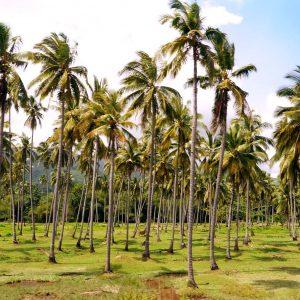 """Palmtree Geometry"" | Philippines"